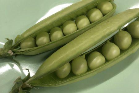 今週の自然農野菜