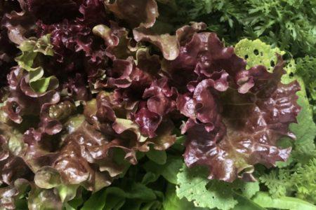 自然農野菜